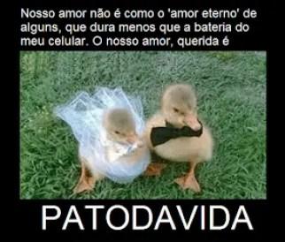 Memes engraçados de animais casamento de patos