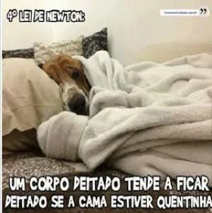 Cão enrolado no cobertor