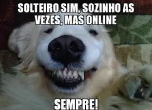 Cão solteiro