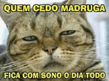 Memes engraçados de animais gato engraçado