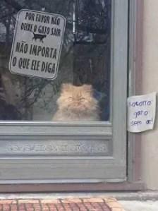 Memes engraçados de animais gato nervoso