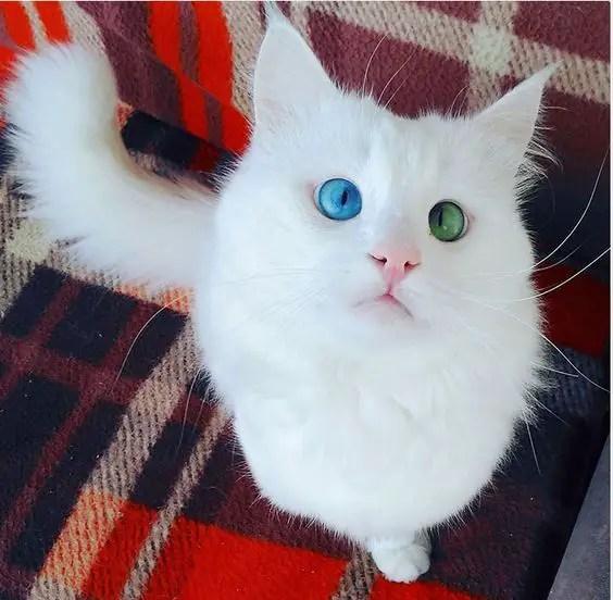 Gato com anomalia genética rara