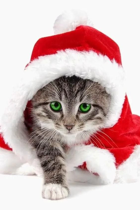 Gato natalino de olhos verdes