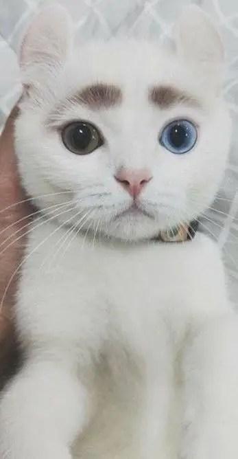 Gato com anomalia genética