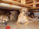 01 aa dorian perros