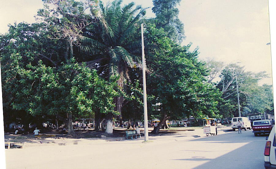 Parque central 82