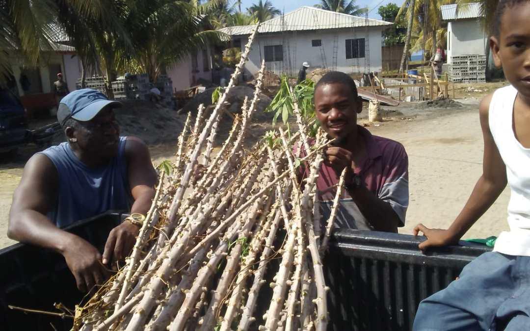 Pobladores del Sector Garífuna son beneficiados con semilla para la siembra de tubérculos.