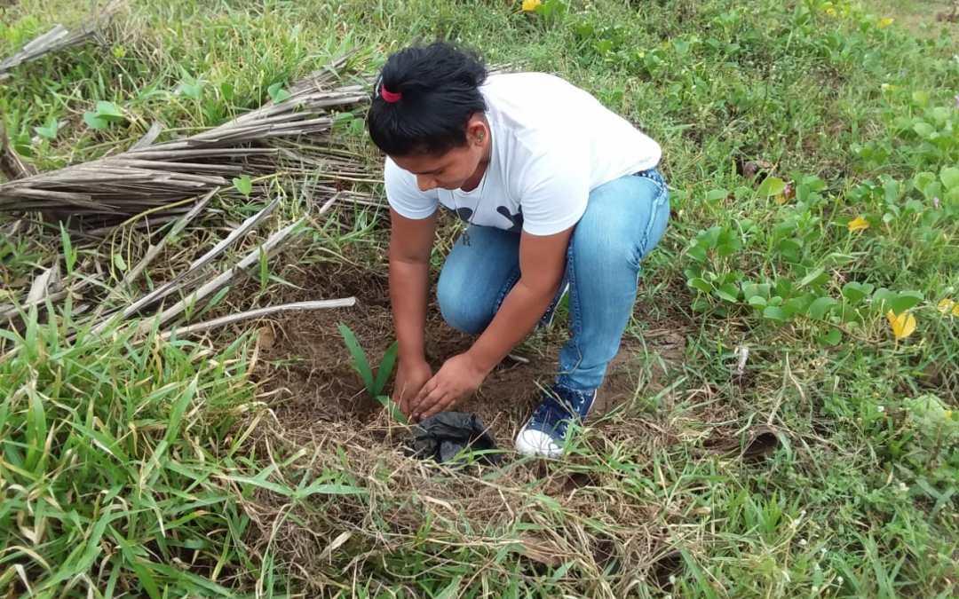Iniciamos reforestación en Bajamar.