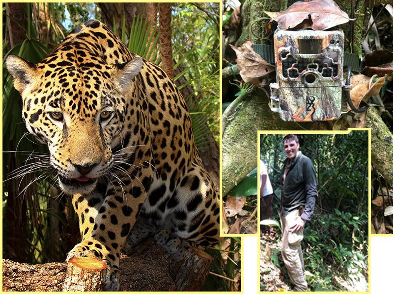 Inician  estudio del jaguar en la cuenca del Rio Tulian.