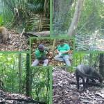 Un Yaguarundi, un Nasua narica y otras especies son captadas con Cámaras Trampa.