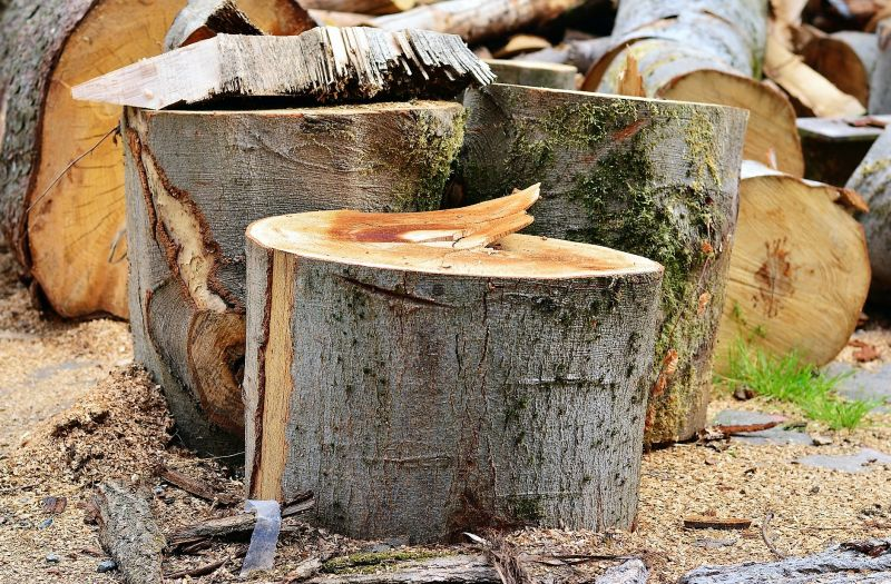 Tramite su permiso para corte de árboles.