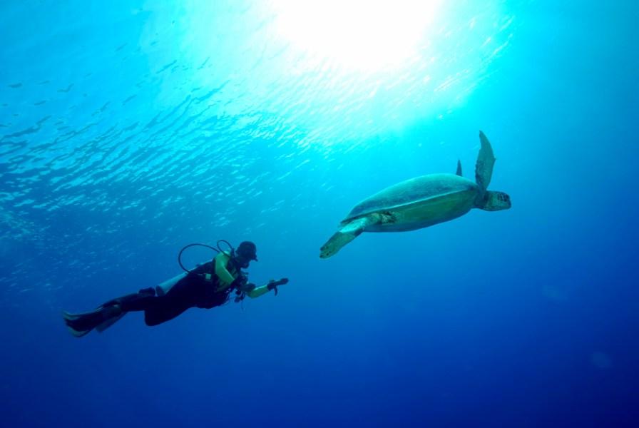 Keindahan bawah laut kepulauan derawan via www.indoneisa.travel