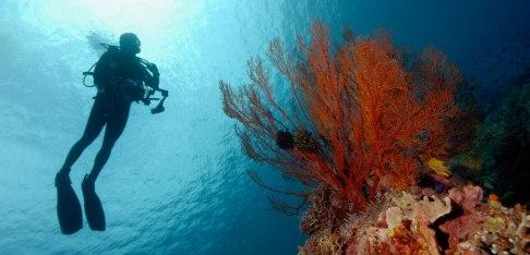 Surga bagi para penyelam dunia