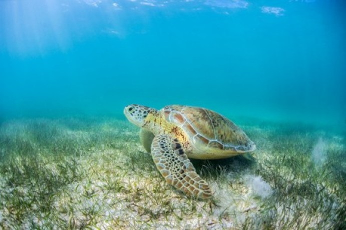 SEARM_EXT_turtle_4-458x305