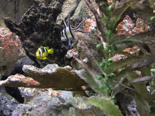 fishypic2
