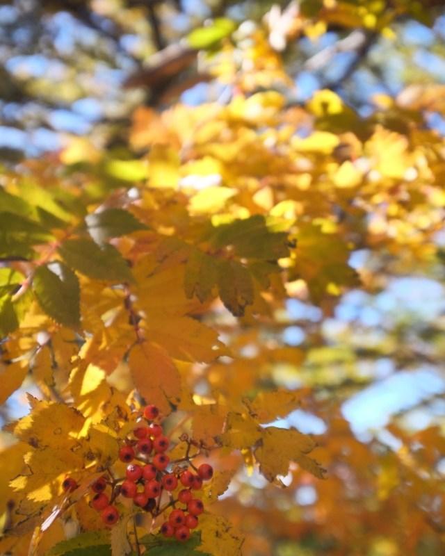 Autumn, Yamanashi, Japan