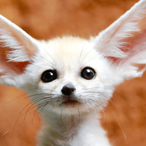 play adorable baby animals