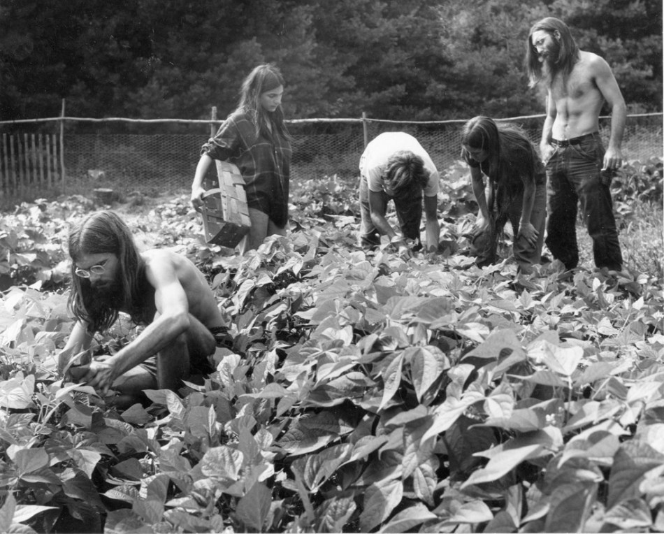 Vermont Historical Society, Rebecca Lepkoff photographer,Garden at Pikes Falls community in Jamaica Vt in 1970s.jpg