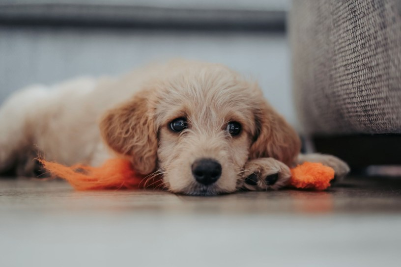 sad puppy in new home