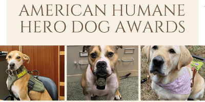 three dogs in running for awards