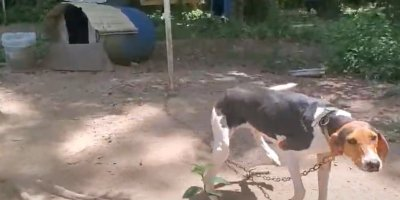 abused dogs rescued