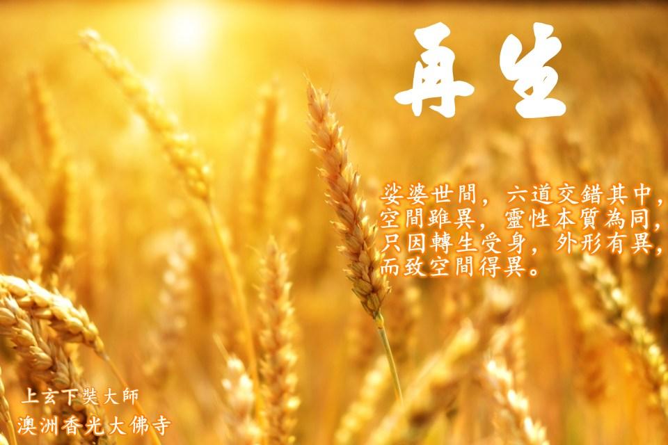 wheat-3506758.jpg