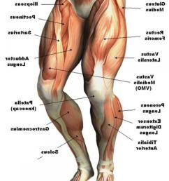 human anatomy leg muscles anatomy hd wallpaper photos lower leg [ 1280 x 1520 Pixel ]