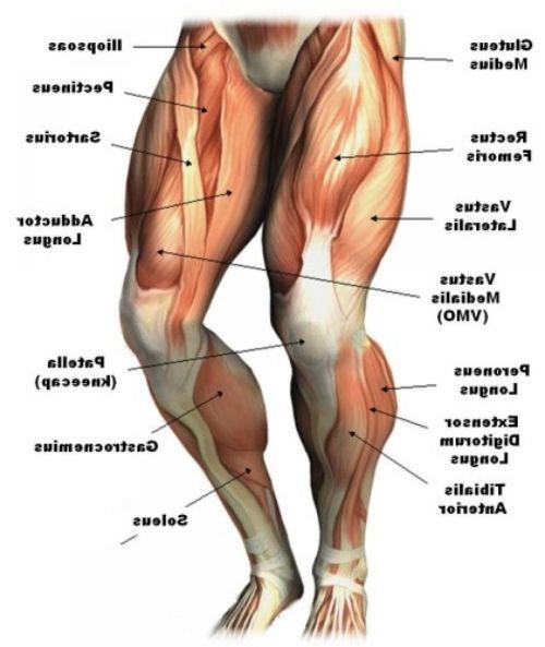 small resolution of human anatomy leg muscles anatomy hd wallpaper photos lower leg