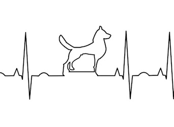 Dog Owners Have a (Healthy) Heart