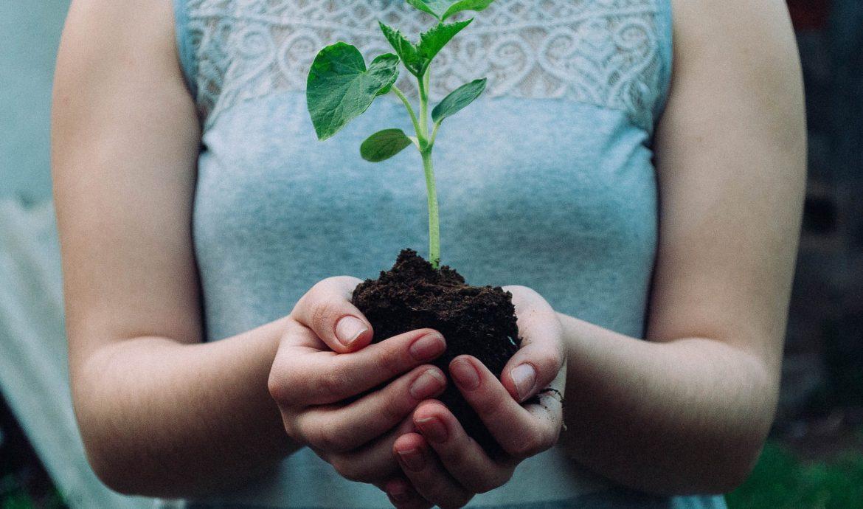 Seedling in Woman's Hands