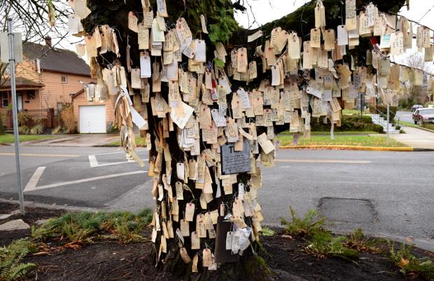 Bildergebnis für wishing tree