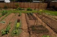 Backyard Ideas | The World's Best Gardening Blog