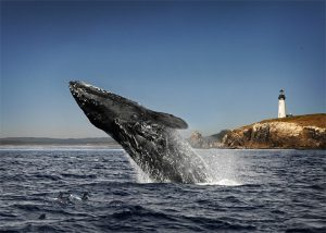 Funny story! I went whale watching in LA once. I was told there were whales. I spent the whole trip vomiting over the side of the boat. Let's hope round two goes better.
