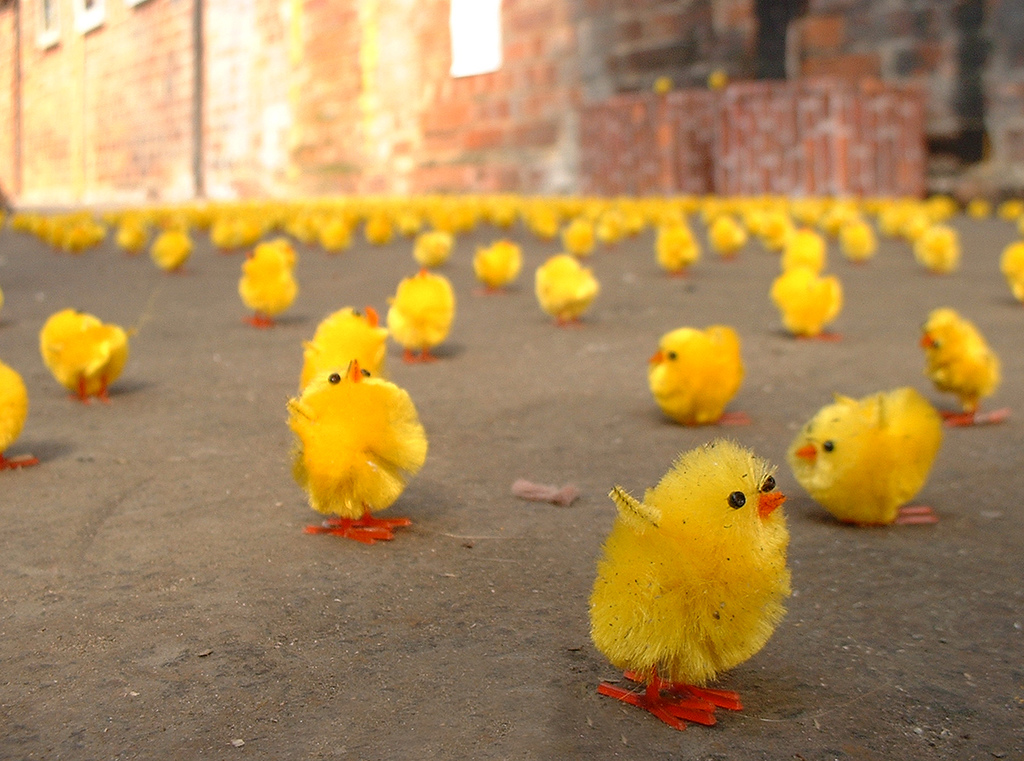 Can chicks really count? I'm confused. Pic by Dominic's Pics