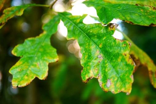 cardiff-autumn-amy-davies-004