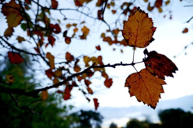 cardiff-autumn-amy-davies-011