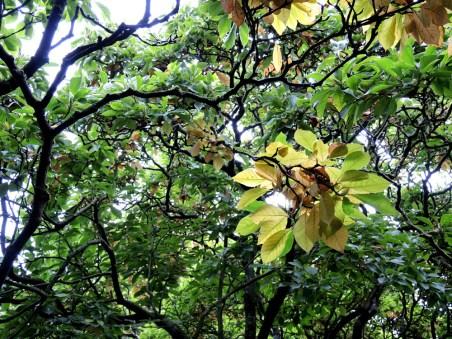 cardiff-autumn-amy-davies-017