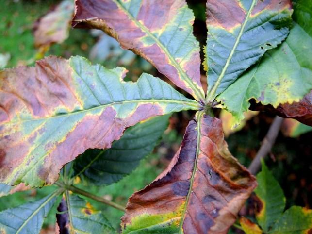 cardiff-autumn-amy-davies-022