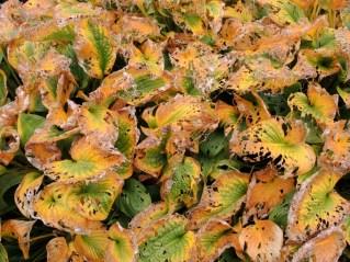 cardiff-autumn-amy-davies-030