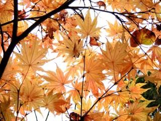 cardiff-autumn-amy-davies-031