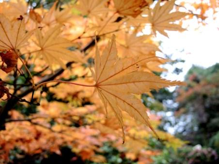 cardiff-autumn-amy-davies-033