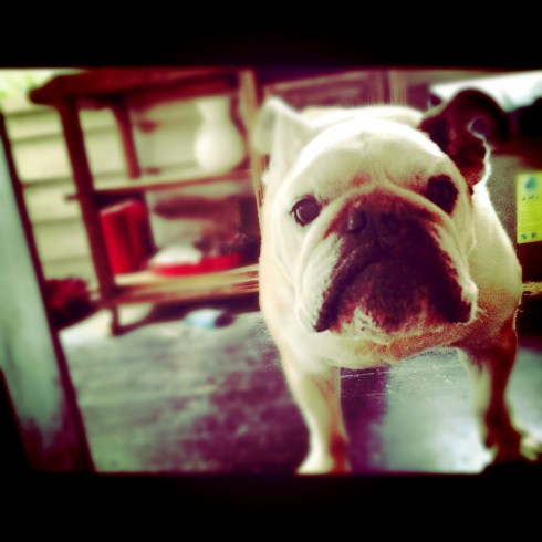 max with instagram app