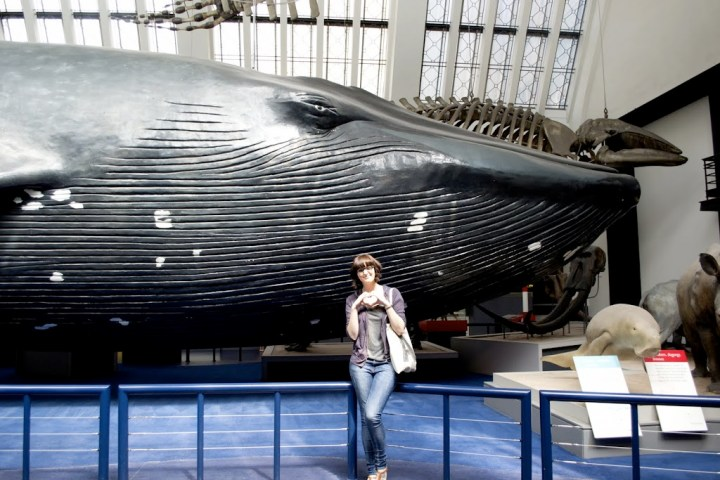 Natural History Museum's blue whale