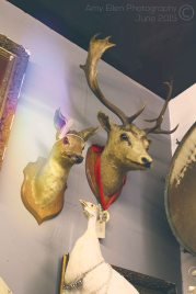 Deer Heads (c)