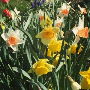Yay-spring
