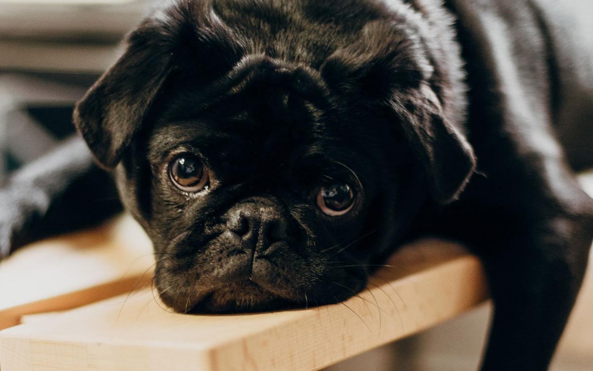 Amy Jean Blog - Am I a Writer- Dog on Bench Header
