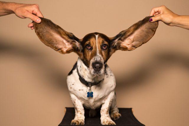 Big ears by Amy Jean