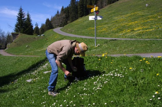 man picking daisies in a green field