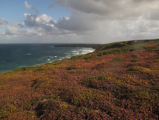 Flowers carpet the cliffs along the South West Coast Path