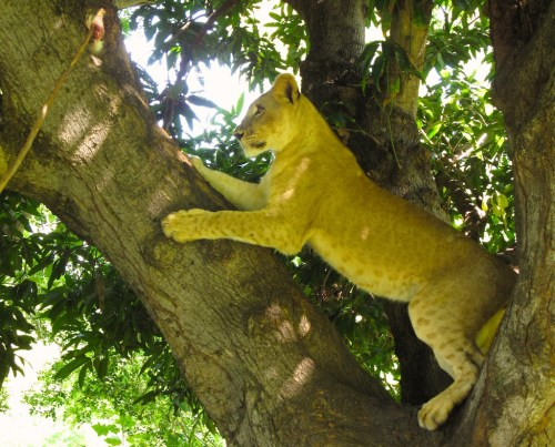 Someone call the fire department. There's a kitten stuck in a tree.